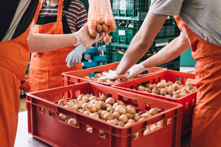 Sortieren von Lebensmitteln Tafel Schweinfurt
